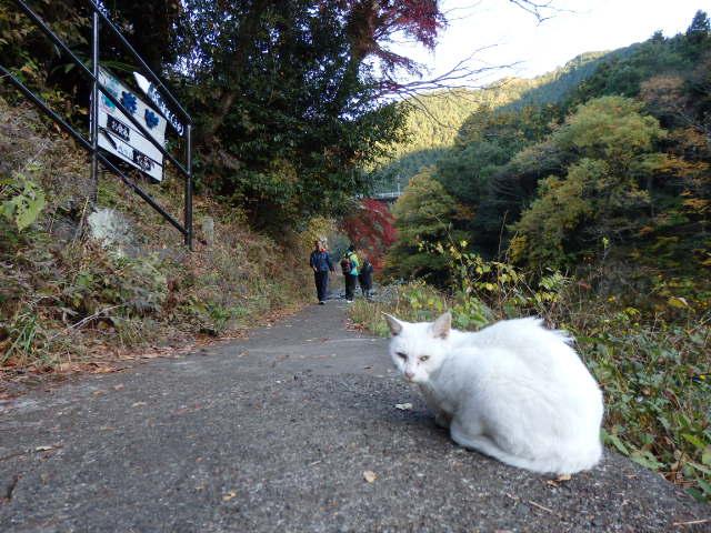 多摩川沿い 遊歩道
