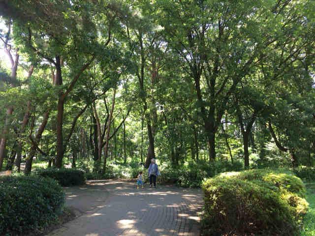 東村山中央公園 森
