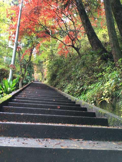 東郷公園 階段