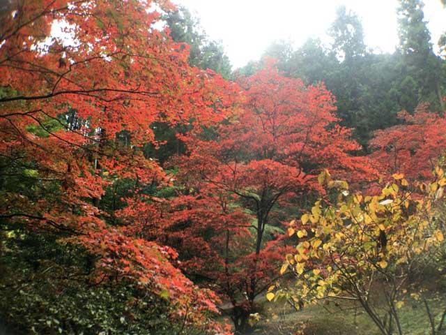 紅葉 東郷公園