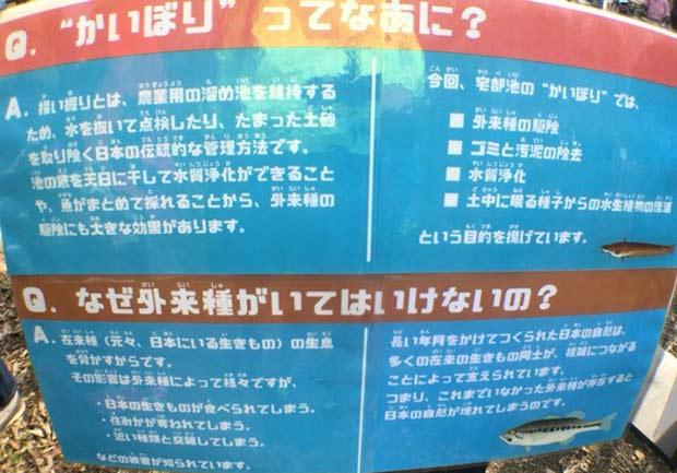 狭山公園 たっちゃん池 かいぼり