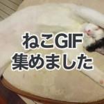 猫好きさん全員集合!猫のGIF動画を集めてみました。