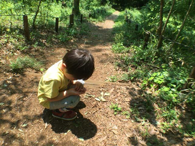 狭山緑地 昆虫採集
