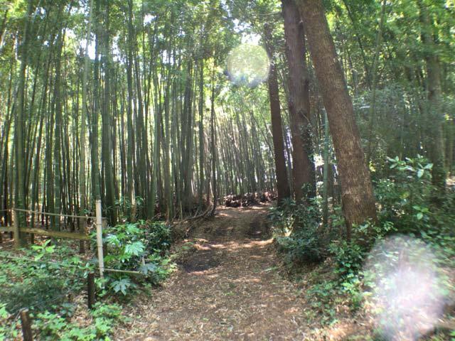 狭山緑地 竹林