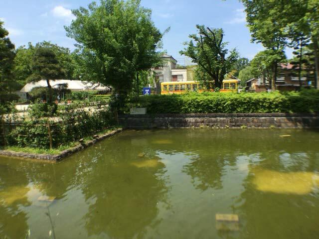 小金井公園 池 亀コイ