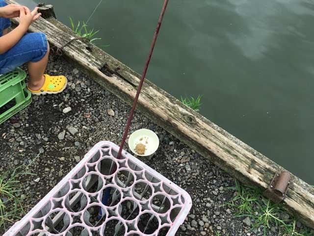 鯉 釣り堀