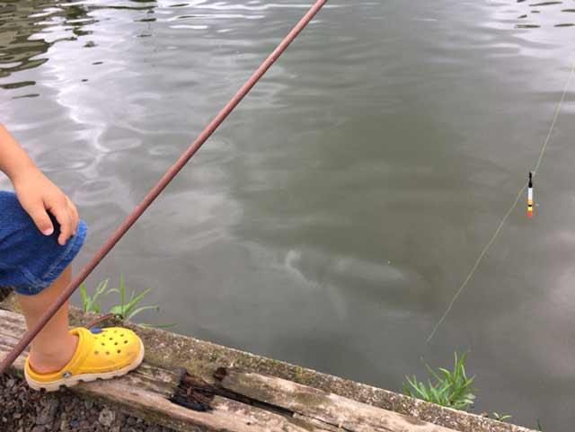 鯉 釣る方法