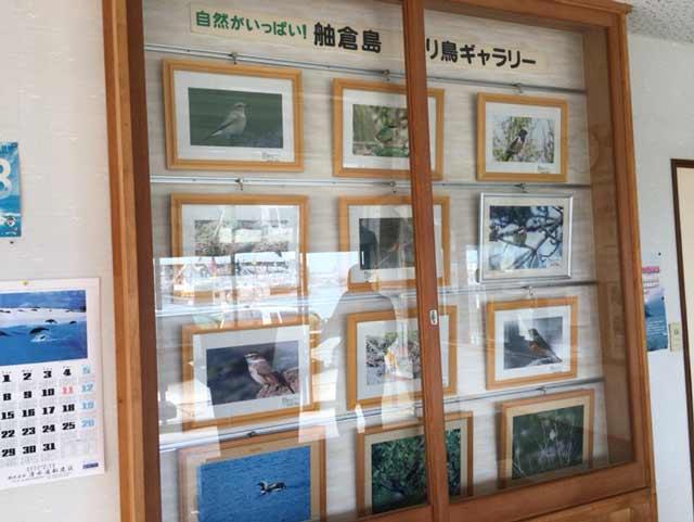 舳倉島 野鳥 写真