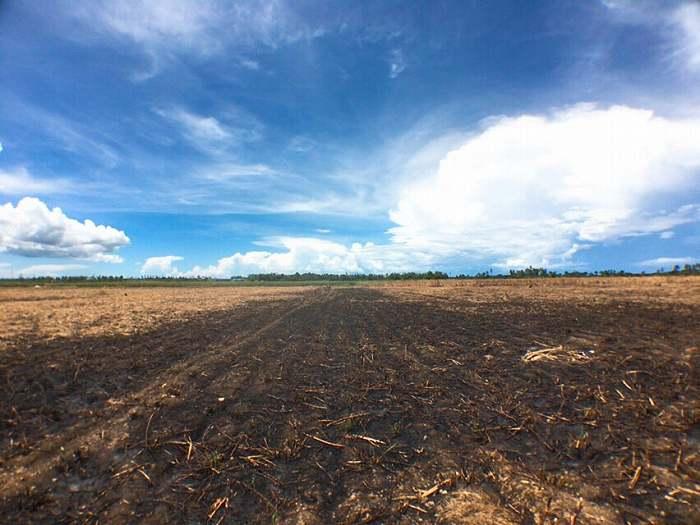 焼き畑農業