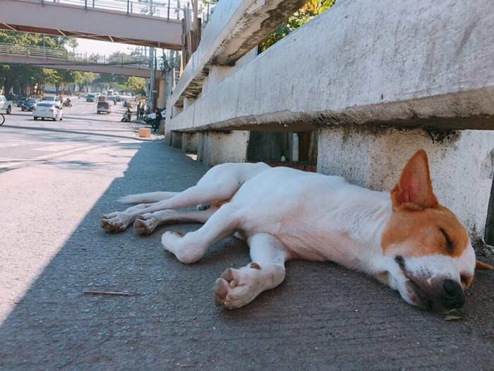 フィリピン 犬