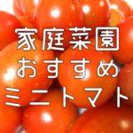 家庭菜園 ミニトマト おすすめ