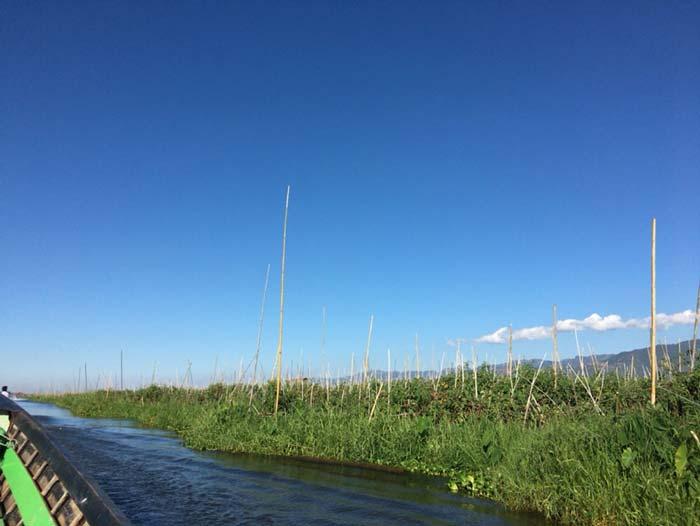 インレー湖 水耕栽培