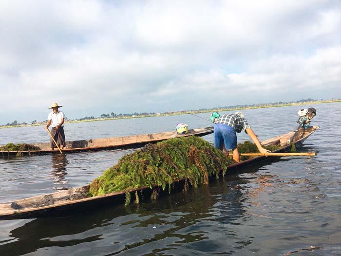 インレー湖 漁師